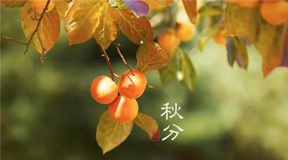 秋分节气的含义是什么_历史文化