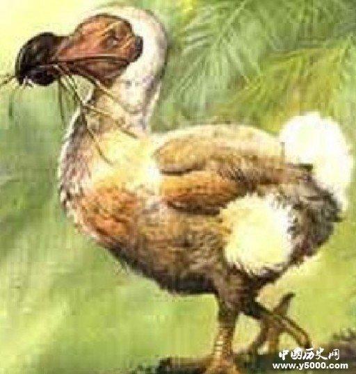 盘点世界上30大已灭绝的珍稀动物