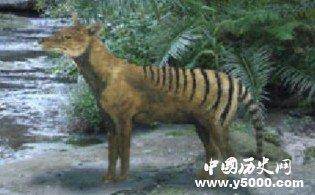 点世界上30大已灭绝的珍稀动物