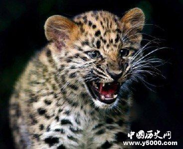 世界自然界六种最孤独动物