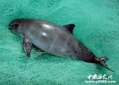 盘点:世界濒临灭绝的十大珍惜动物