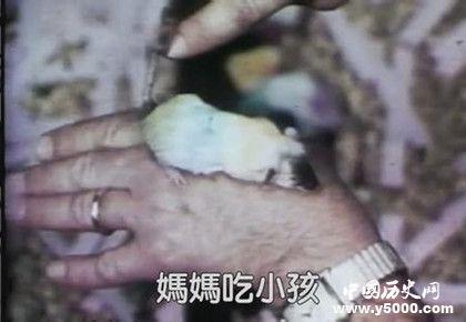 老鼠乌托邦实验是什么老鼠乌托邦实验过程实验结果