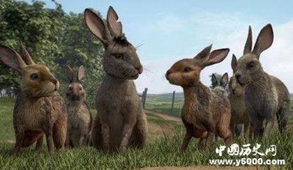 英剧《兔子共和国》剧情内容介绍主题曲叫什么原著内容介绍