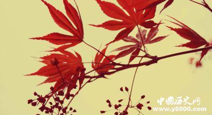 枫叶的寓意枫叶象征着什么意思?