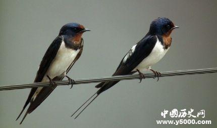 燕子的寓意燕子象征着什么意义?
