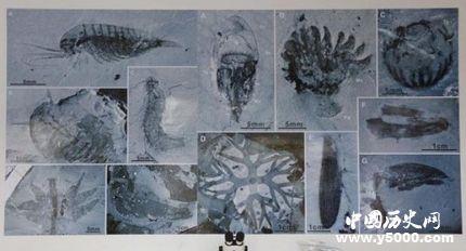 宜昌现清江生物群寒武纪生命大爆发的原因是什么?