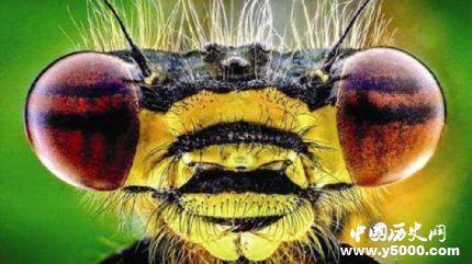 1962昆仑山螳螂人之谜 昆仑山螳螂人是真的吗?