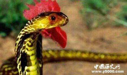鸡冠蛇传说之谜-鸡冠蛇真的存在吗?