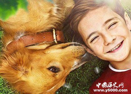 一条狗的使命2上映时间_一条狗的使命2剧情好看吗