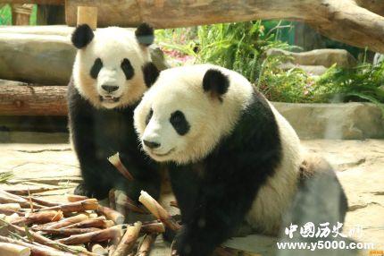 大熊猫认脸APP将上线_大熊猫认脸APP怎样识别熊猫