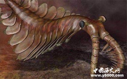 奇虾的形状特征_奇虾称霸寒武纪的原因_中国历史网