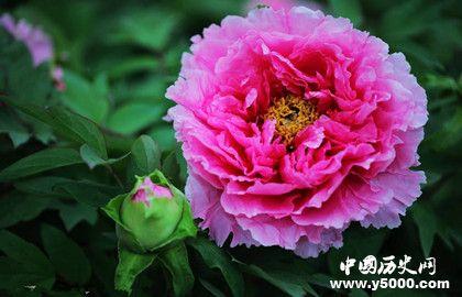 国花的由来是怎样的_中国为什么没有国花_中国历史网