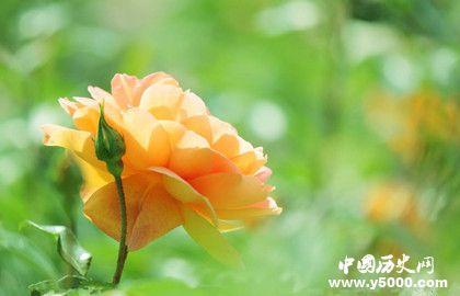 中国十大名花是哪十种花_中国十大名花的文化内涵_中国历史网