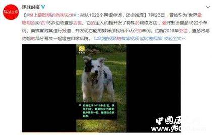 最聰明狗狗去世_最聰明狗狗會1000多個單詞你信嗎_中國歷史網