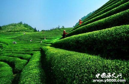 中国十大名茶_中国十大名茶有哪些_中国著名茶叶品牌