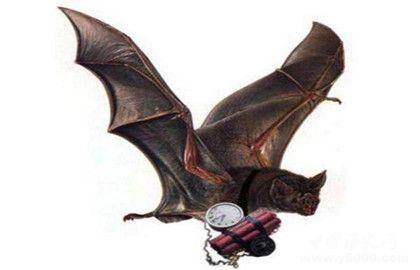 蝙蝠炸弹的介绍_蝙蝠炸弹的设计性能_蝙蝠炸弹的目的