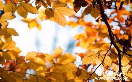 秋分是什么意思_秋分为什么叫秋分_秋分有什么寓意