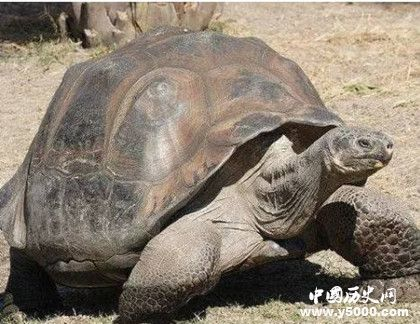 世界上最长寿的动物_世界上组长寿的动物有哪些_世界上什么动物最长寿_中国历史网