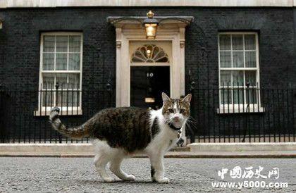 唐宁街十号的猫_唐宁街首相府的猫_唐宁街的猫拉里_中国历史网