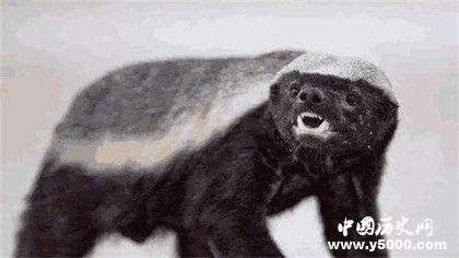 能把自己玩死的動物_自己能把自己坑死的動物_能把自己蠢死的動物_中國歷史網