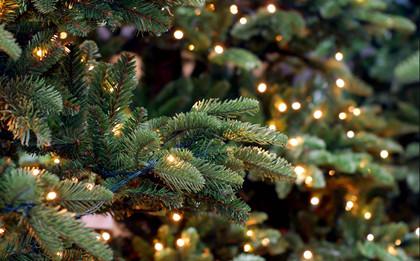 圣诞树有哪些寓意_盘点圣诞树的7大寓意_中国历史网