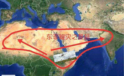 2020東非蝗災什么時候發生的_2020東非蝗災發生過程情況_中國歷史網