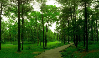 植樹節的意義是什么_植樹節的意義簡述_中國歷史網