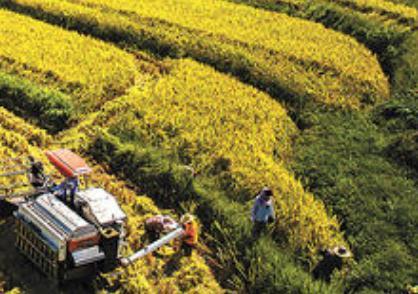 有关农业生产的谚语有哪些